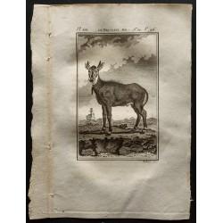 1799 - Le Nil-gaut mâle