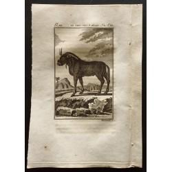 1799 - Le gnou