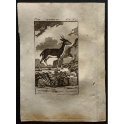 1799 - Le Bitbok mâle