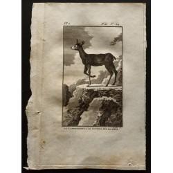 1799 - Le Klippsbringer ou...