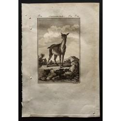 1799 - L'antilope femelle