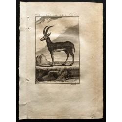1799 - La gazelle Tzeïran