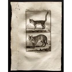 1799 - Le serval, le margay