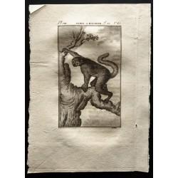 1799 - L'indri à bourres