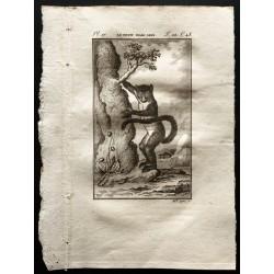 1799 - Le petit maki gris