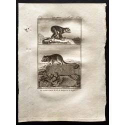 1799 - Le loris, le maki...
