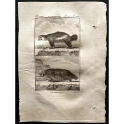 1799 - Le glouton, le Carcajou