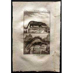 1799 - Le coase, le chinche