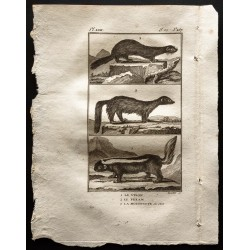 1799 - Le vison, le pekan,...