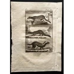 1799 - La fossane, le...