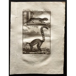 1799 - Le touan, le mococo