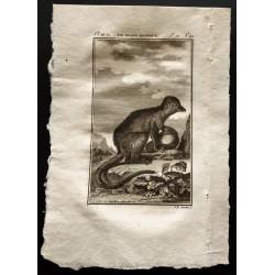 1799 - Le grand mongous