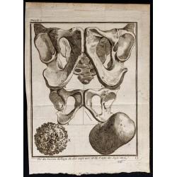 1781 - Os et anatomie du...