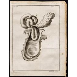 1781 - Intestins