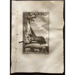 1799 - L'aï adulte (paresseux)