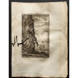 1799 - Le kouri ou le petit...