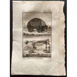 1799 - Le paresseux ours,...