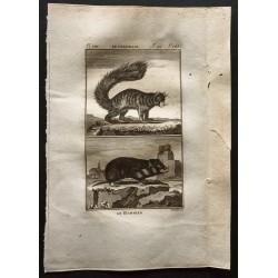1799 - Le hamster, le coqualin