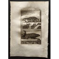 1799 - Le souslik, le bobak