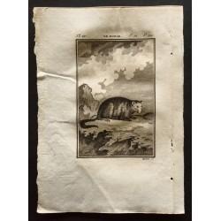 1799 - Le monak