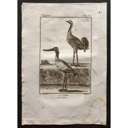 1801 - Le jabiru, la grue...