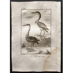 1801 - Le blongios, le...