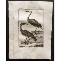 1801 - L'ombrette, le...