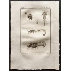 1802 - Anatomie de...