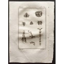1802 - Coupe de crustacés...