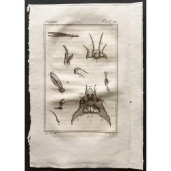 1802 - Crustacés [Crustacés]