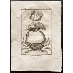 1802 - Le calappe granulé,...