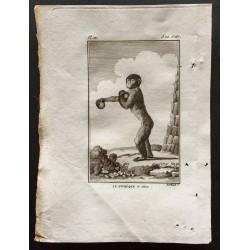 1800 - Le pithèque vu...
