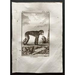 1800 - Le pithèque et son...