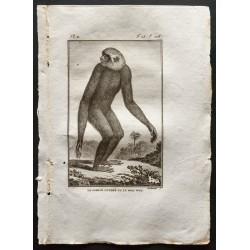 1800 - Le gibbon cendré ou...