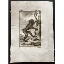 1800 - Le babouin des bois...