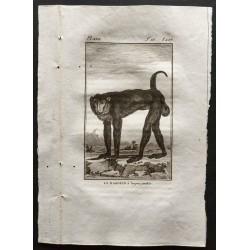 1800 - Le babouin à longues...