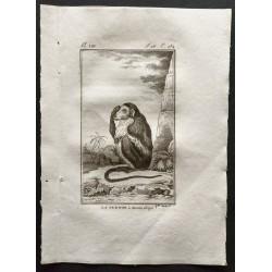 1800 - La guenon à museau...