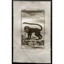 1800 - La guenon à crinière...