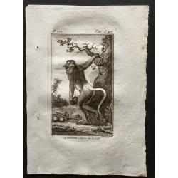 1800 - La guenon à long...