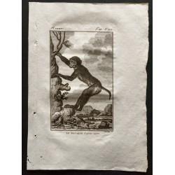 1800 - Le macaque à queue...
