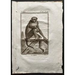 1800 - Le rhésus [Singes]