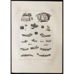 1864 - Crâne et mâchoire