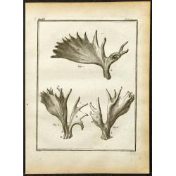 1764 - Bois d'élan