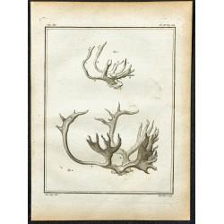1764 - Bois de renne