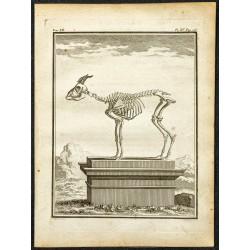 1764 - Squelette d'un...