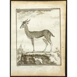 1764 - La gazelle