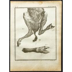 1764 - Pattes et arrière...