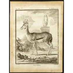 1764 - Gazelle Corine