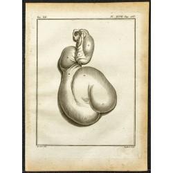 1764 - Estomac de la...