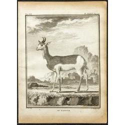1764 - Nanguer du Sénégal